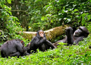 11 days rwanda gorilla tour and chimpanzee trekking