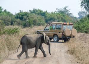 5 Days uganda gorilla safari
