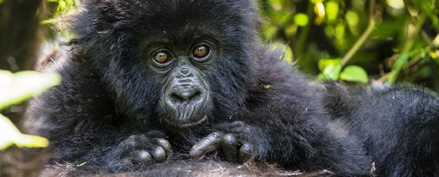 7 days rwanda gorilla tour