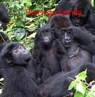 Bwenge-gorilla-family