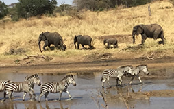 taragire national park tanzania