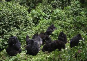 bwindi-forest