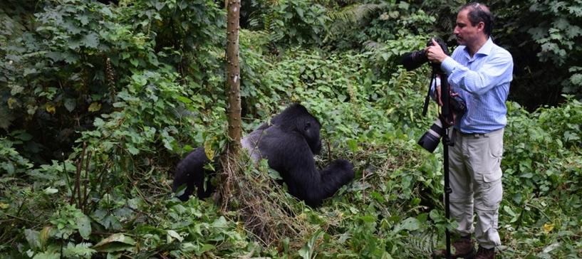 Filming Gorillas/video shooting