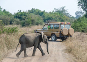 10 Days wildlife safari