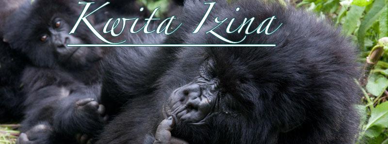 gorilla naming ceremony