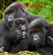 susa-gorilla-family