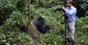 An encounter with gorillas