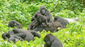 3 days gorilla tour