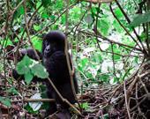 Rwanda gorilla treks