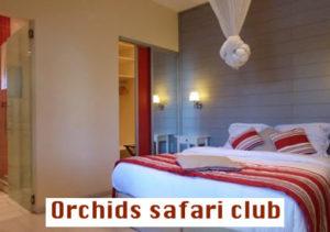 Orchids safari club