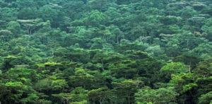 vegetation in Bwindi