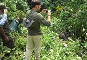 Gorilla safaris Bwindi