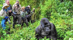 gorilla tours in Bwindi