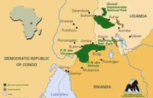 Where to trek mountain gorillas