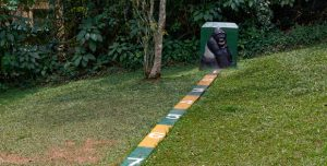 Tips to trek gorillas