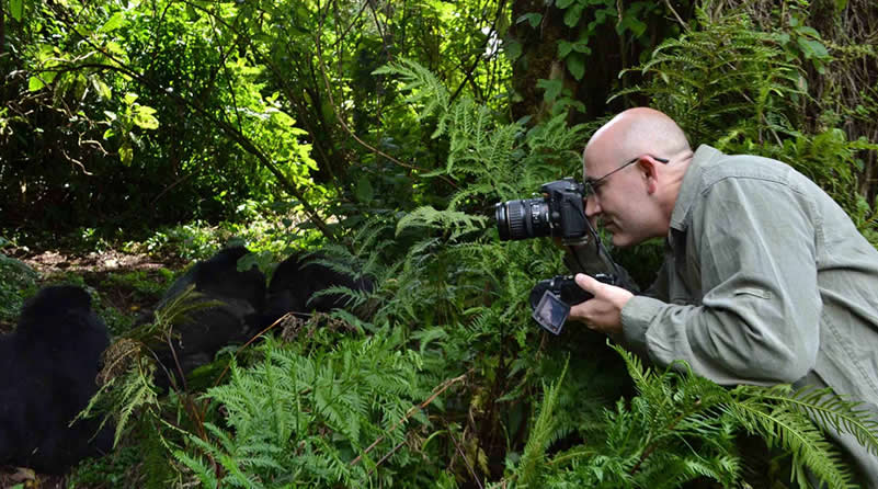 Gorilla tracking time