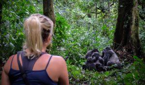 How to trek gorillas solo