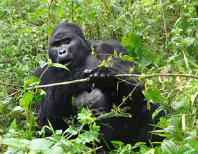 Where to trek gorillas in Uganda