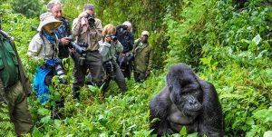 Gorilla trekking time