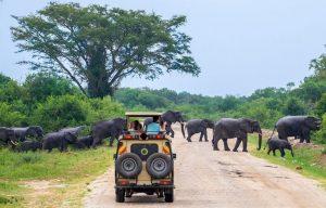 Game Safaris in Uganda