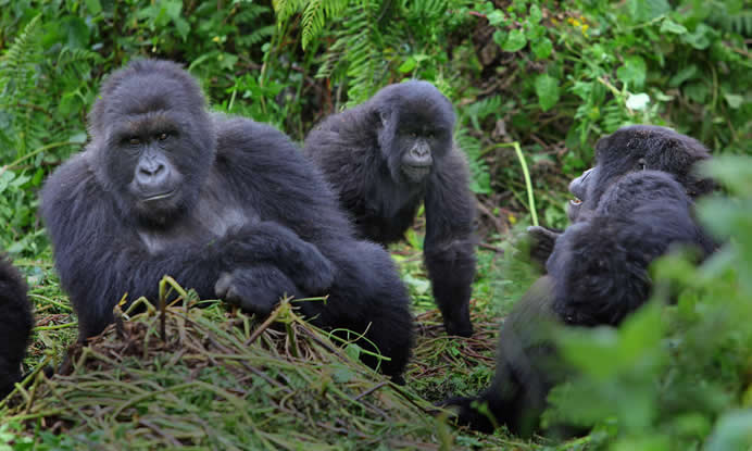 kigali to Mgahinga gorilla safaris
