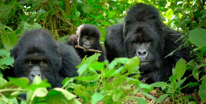 Discounted Rwanda permits