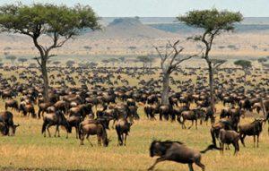12 Days primates and game safaris
