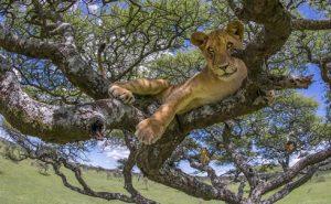 Luxury safaris in Uganda