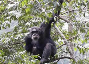 Rwanda Primates Safari