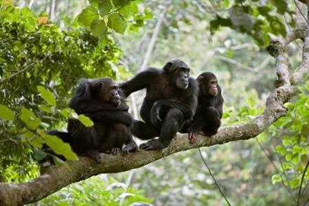 5 Days Rwanda luxury safari