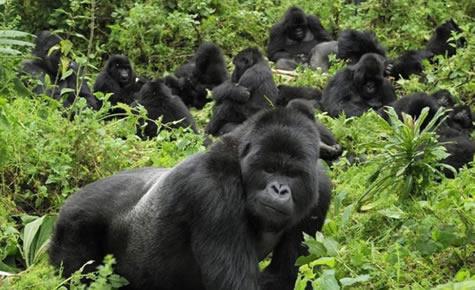 Luxury safaris in Rwanda