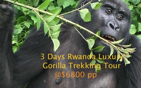 Luxury Rwanda Safaris