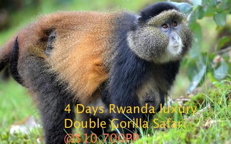 Luxury double gorilla trekking in Rwanda