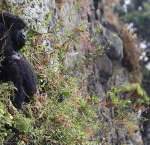 7 Days Rwanda Uganda safari