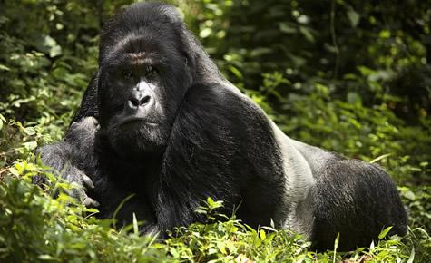 Luxury gorilla tours